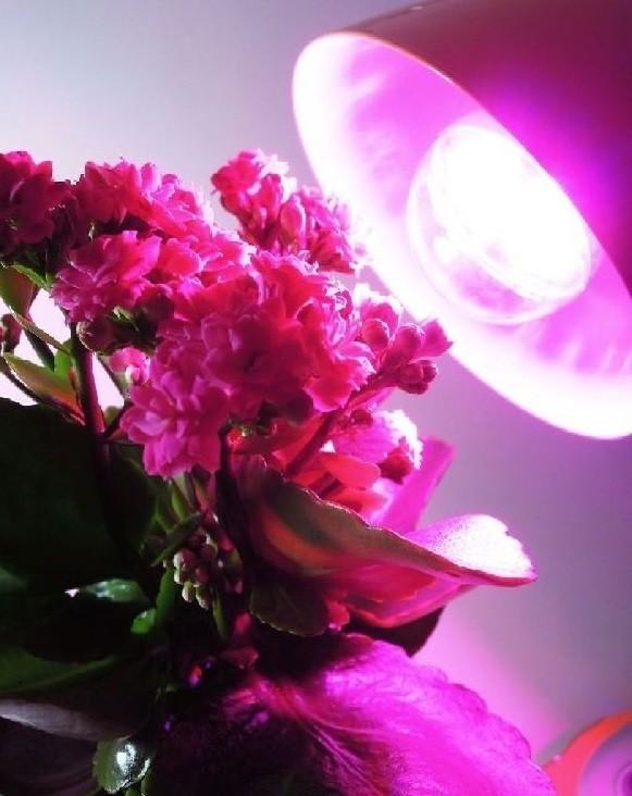 LED лампа для растений.